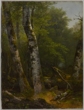 Asher B. Durand (American, 1796-1886). <em>Landscape (Birch and Oaks)</em>, ca. 1855-1857. Oil on canvas, 23 15/16 x 17 7/8 in. (60.8 x 45.4 cm). Brooklyn Museum, Bequest of Charles A. Schieren, 15.326 (Photo: , 15.326_PS9.jpg)