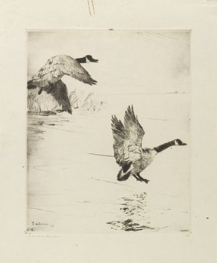 Frank Weston Benson (American, 1862-1951). <em>Geese Alighting</em>, 1916. Drypoint etching on cream, medium thick, slightly textured wove paper, Sheet: 14 1/16 x 11 5/16 in. (35.7 x 28.7 cm). Brooklyn Museum, Museum Collection Fund, 17.136 (Photo: Brooklyn Museum, 17.136_PS1.jpg)