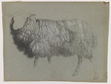 Albert Bierstadt (American, born Germany, 1830-1902). <em>Study of a Ewe</em>, ca. 1855. Black crayon and red and white chalk on blue-green, medium-weight, slightly textured laid paper., Sheet: 10 9/16 x 14 1/16 in. (26.8 x 35.7 cm). Brooklyn Museum, Purchased with funds given by Mr. and Mrs. Leonard L. Milberg, 1990.101.2 (Photo: Brooklyn Museum, 1990.101.2_IMLS_PS3.jpg)