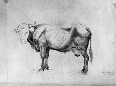 James McDougal Hart (American, born Scotland, 1828-1901). <em>Cow - A Study</em>, July 28, 1871. Graphite on paper, Sheet: 12 x 16 3/16 in. (30.5 x 41.1 cm). Brooklyn Museum, Purchased with funds given by Mr. and Mrs. Leonard L. Milberg, 1990.101.4 (Photo: Brooklyn Museum, 1990.101.4_bw.jpg)