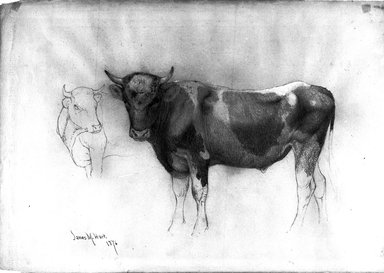 James McDougal Hart (American, born Scotland, 1828-1901). <em>Study of a Bull</em>, 1876. Graphite with white chalk on paper, Sheet: 12 15/16 x 18 5/16 in. (32.9 x 46.5 cm). Brooklyn Museum, Purchased with funds given by Mr. and Mrs. Leonard L. Milberg, 1990.101.5 (Photo: Brooklyn Museum, 1990.101.5_bw.jpg)