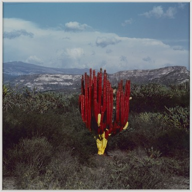 Lourdes Grobet (Mexican, born 1940). <em>Untitled (Cactus Painted Red/Yellow)</em>, ca. 1986. Silver dye bleach photograph (Cibachrome), image: 7 11/16 × 7 3/4 in. (19.5 × 19.7 cm). Brooklyn Museum, Gift of Marcuse Pfeifer, 1990.119.12. © artist or artist's estate (Photo: , 1990.119.12_PS9.jpg)