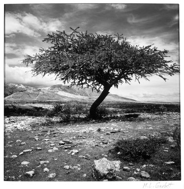 Lourdes Grobet (Mexican, born 1940). <em>Untitled (Tree with Yellow Painted Ground)</em>, ca. 1986. Silver dye bleach photograph (Cibachrome), image: 7 1/2 x 7 1/2 in. (19.1 x 19.1 cm). Brooklyn Museum, Gift of Marcuse Pfeifer, 1990.119.13. © artist or artist's estate (Photo: Brooklyn Museum, 1990.119.13_bw.jpg)