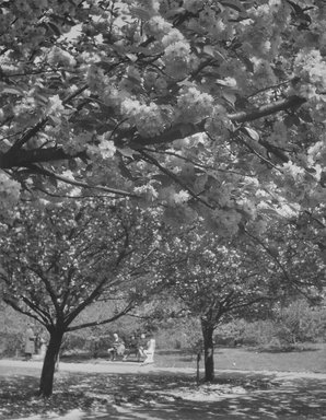 John Albok (American, born Hungary, 1894-1982). <em>Brooklyn Botanic Garden</em>, 1938. Gelatin silver photograph, 11 1/2 x 10 1/2 in. (29.2 x 26.7 cm). Brooklyn Museum, Gift of Ilona Albok Vitarius, 1990.122.15. © artist or artist's estate (Photo: Brooklyn Museum, 1990.122.15.jpg)