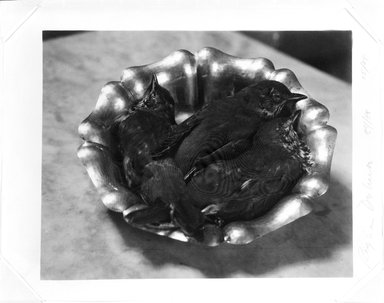 Regina DeLuise (American, born 1959). <em>Sparrows in a Silver Bowl</em>, 1984. Palladium photograph, 8 x 10 in. (20.3 x 25.4 cm). Brooklyn Museum, Purchased with funds given by Richard Menschel, Eileen and Adam Boxer, Dr. Joel E. Hershey, Harry Kahn, Marilynn and Ivan Karp, and Merrill Lynch & Co., Inc., 1990.67.1. © artist or artist's estate (Photo: Brooklyn Museum, 1990.67.1_bw.jpg)