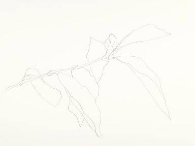 Ellsworth Kelly (American, 1923-2015). <em>Magnolia</em>, 1986. Graphite on paper, 22 x 28 in. (55.9 x 71.1 cm). Brooklyn Museum, Gift of Henry Persche, 1994.221. © artist or artist's estate (Photo: Brooklyn Museum, 1994.221_PS6.jpg)