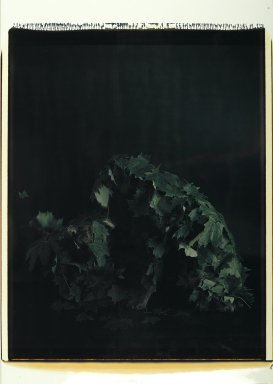 William Wegman (American, born 1943). <em>Man Ray Under Leaves</em>, 1980. Dye diffusion photograph (Polaroid), sheet: 31 1/4 x 22 in. Brooklyn Museum, Gift of Laurie Jewell and Owen Morrel, 1994.224.1. © artist or artist's estate (Photo: Brooklyn Museum, 1994.224.1_PS2.jpg)