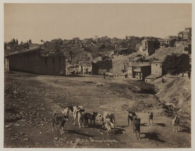 Pascal Sébah (Turkish, 1823-1886). <em>Group of Dogs</em>, ca. 1860-1880. Gelatin silver photograph, sheet: height: 12 in. Brooklyn Museum, Purchased with funds given by Dr. and Mrs. Shahrokh Ahkami and an anonymous donor, 1995.86.11 (Photo: Brooklyn Museum, 1995.86.11_IMLS_PS3.jpg)
