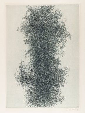 The Print Club of Cleveland. <em>Wisteria</em>, 1961. Etching on paper, 13 3/4 x 10 in. Brooklyn Museum, Bequest of Mrs. Carl L. Selden, 1996.157.14. © artist or artist's estate (Photo: Brooklyn Museum, 1996.157.14_PS4.jpg)