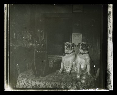Daniel Berry Austin (American, born 1863, active 1899-1909). <em>Friendly Enemies, Dog and Cat, Flatbush</em>, ca. 1899-1909. Gelatin silver glass dry plate negative Brooklyn Museum, Brooklyn Museum/Brooklyn Public Library, Brooklyn Collection, 1996.164.1-1026 (Photo: Brooklyn Museum, 1996.164.1-1026_IMLS_SL2.jpg)