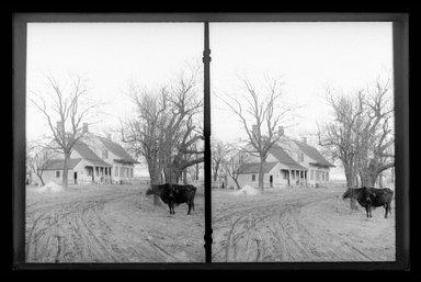 Daniel Berry Austin (American, born 1863, active 1899-1909). <em>Mrs. Ditmas's Cow, Kings Highway at Kouwenhoven Lane, Flatlands, Brooklyn</em>, ca. 1899-1909. Gelatin silver glass dry plate negative Brooklyn Museum, Brooklyn Museum/Brooklyn Public Library, Brooklyn Collection, 1996.164.1-162 (Photo: Brooklyn Museum, 1996.164.1-162_glass_SL1.jpg)