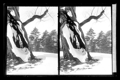 Daniel Berry Austin (American, born 1863, active 1899-1909). <em>Prospect Park, Late Snow, Brooklyn</em>, April 10, 1907. Gelatin silver glass dry plate negative Brooklyn Museum, Brooklyn Museum/Brooklyn Public Library, Brooklyn Collection, 1996.164.1-169 (Photo: Brooklyn Museum, 1996.164.1-169_glass_SL1.jpg)