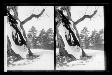 Daniel Berry Austin (American, born 1863, active 1899-1909). <em>Prospect Park, Late Snow, Brooklyn</em>, April 10, 1907. Gelatin silver glass dry plate negative Brooklyn Museum, Brooklyn Museum/Brooklyn Public Library, Brooklyn Collection, 1996.164.1-171 (Photo: Brooklyn Museum, 1996.164.1-171_glass_SL1.jpg)