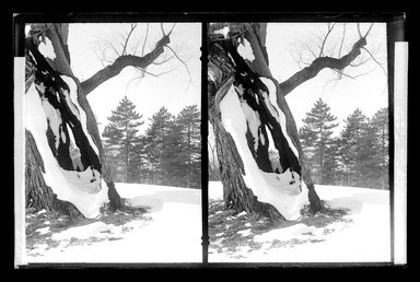 Daniel Berry Austin (American, born 1863, active 1899-1909). <em>Prospect Park, Late Snow, Brooklyn</em>, April 10, 1907. Gelatin silver glass dry plate negative Brooklyn Museum, Brooklyn Museum/Brooklyn Public Library, Brooklyn Collection, 1996.164.1-172 (Photo: Brooklyn Museum, 1996.164.1-172_glass_SL1.jpg)