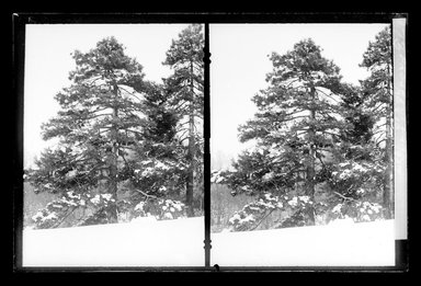 Daniel Berry Austin (American, born 1863, active 1899-1909). <em>Prospect Park, Late Snow, Brooklyn</em>, April 10, 1907. Gelatin silver glass dry plate negative Brooklyn Museum, Brooklyn Museum/Brooklyn Public Library, Brooklyn Collection, 1996.164.1-173 (Photo: Brooklyn Museum, 1996.164.1-173_glass_SL1.jpg)