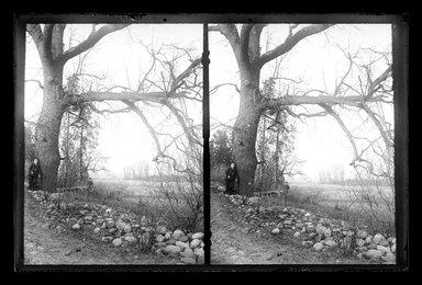 Daniel Berry Austin (American, born 1863, active 1899-1909). <em>Pond at Paerdegat, Flatbush, Brooklyn</em>, ca. 1899-1909. Gelatin silver glass dry plate negative Brooklyn Museum, Brooklyn Museum/Brooklyn Public Library, Brooklyn Collection, 1996.164.1-183 (Photo: Brooklyn Museum, 1996.164.1-183_glass_SL1.jpg)