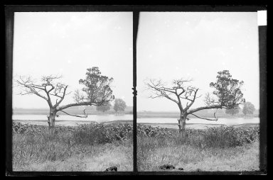 Daniel Berry Austin (American, born 1863, active 1899-1909). <em>Ryder's Pond (Strome Kill), Old Cedar, West Side of Pond, Brooklyn</em>, ca. 1899-1909. Gelatin silver glass dry plate negative Brooklyn Museum, Brooklyn Museum/Brooklyn Public Library, Brooklyn Collection, 1996.164.1-76 (Photo: Brooklyn Museum, 1996.164.1-76_IMLS_SL2.jpg)
