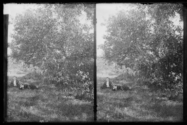 Daniel Berry Austin (American, born 1863, active 1899-1909). <em>Ryder's Pond (Strome Kill), Ralph and Marshall, Hedge and Bitter Sweet, Avenue T and Marsh Street, Brooklyn</em>, ca. 1899-1909. Gelatin silver glass dry plate negative Brooklyn Museum, Brooklyn Museum/Brooklyn Public Library, Brooklyn Collection, 1996.164.1-80 (Photo: Brooklyn Museum, 1996.164.1-80_IMLS_SL2.jpg)