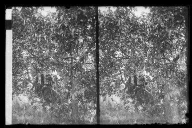 Daniel Berry Austin (American, born 1863, active 1899-1909). <em>Ryder's Pond (Strome Kill), Ralph and Marshall in a Tree, Avenue T and Marsh Street, Brooklyn</em>, ca. 1899-1909. Gelatin silver glass dry plate negative Brooklyn Museum, Brooklyn Museum/Brooklyn Public Library, Brooklyn Collection, 1996.164.1-81 (Photo: Brooklyn Museum, 1996.164.1-81_IMLS_SL2.jpg)