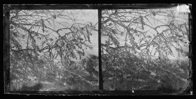 George Bradford Brainerd (American, 1845-1887). <em>Beach Plums at Coney Island, Brooklyn</em>, ca. 1872-1887. Collodion silver glass wet plate negative Brooklyn Museum, Brooklyn Museum/Brooklyn Public Library, Brooklyn Collection, 1996.164.2-1135 (Photo: Brooklyn Museum, 1996.164.2-1135_glass_IMLS_SL2.jpg)