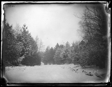 George Bradford Brainerd (American, 1845-1887). <em>Prospect Park, Brooklyn</em>, 1880. Collodion silver glass wet plate negative Brooklyn Museum, Brooklyn Museum/Brooklyn Public Library, Brooklyn Collection, 1996.164.2-1430 (Photo: Brooklyn Museum, 1996.164.2-1430_glass_bw_SL1.jpg)