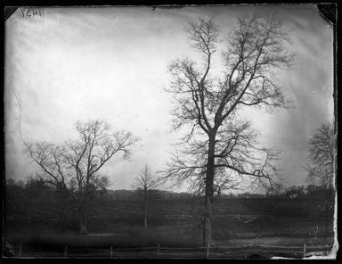 George Bradford Brainerd (American, 1845-1887). <em>Pine Oaks near Jamaica, Long Island</em>, ca. 1872-1887. Collodion silver glass wet plate negative Brooklyn Museum, Brooklyn Museum/Brooklyn Public Library, Brooklyn Collection, 1996.164.2-1437 (Photo: Brooklyn Museum, 1996.164.2-1437_glass_bw_SL1.jpg)