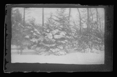 George Bradford Brainerd (American, 1845-1887). <em>Snow Trees, Prospect Park, Brooklyn</em>, ca. 1872-1887. Dry negative plate Brooklyn Museum, Brooklyn Museum/Brooklyn Public Library, Brooklyn Collection, 1996.164.2-1896 (Photo: Brooklyn Museum, 1996.164.2-1896_glass_IMLS_SL2.jpg)