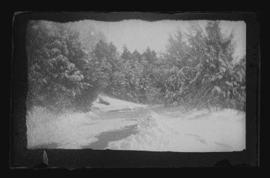George Bradford Brainerd (American, 1845-1887). <em>Snow Trees, Prospect Park, Brooklyn</em>, 1885. Dry negative plate Brooklyn Museum, Brooklyn Museum/Brooklyn Public Library, Brooklyn Collection, 1996.164.2-1897 (Photo: Brooklyn Museum, 1996.164.2-1897_glass_IMLS_SL2.jpg)