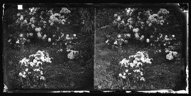 George Bradford Brainerd (American, 1845-1887). <em>[Unidentified]</em>, ca. 1872-1887. Dry negative plate Brooklyn Museum, Brooklyn Museum/Brooklyn Public Library, Brooklyn Collection, 1996.164.2-2445 (Photo: Brooklyn Museum, 1996.164.2-2445_bw_SL4.jpg)