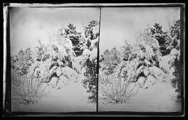 George Bradford Brainerd (American, 1845-1887). <em>Snow Scene, Prospect Park, Brooklyn</em>, ca. 1872-1887. Collodion silver glass wet plate negative Brooklyn Museum, Brooklyn Museum/Brooklyn Public Library, Brooklyn Collection, 1996.164.2-264 (Photo: Brooklyn Museum, 1996.164.2-264_glass_IMLS_SL2.jpg)