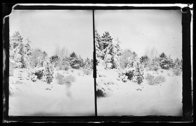 George Bradford Brainerd (American, 1845-1887). <em>Snow Scene, Prospect Park, Brooklyn</em>, ca. 1872-1887. Collodion silver glass wet plate negative Brooklyn Museum, Brooklyn Museum/Brooklyn Public Library, Brooklyn Collection, 1996.164.2-267 (Photo: Brooklyn Museum, 1996.164.2-267_glass_IMLS_SL2.jpg)
