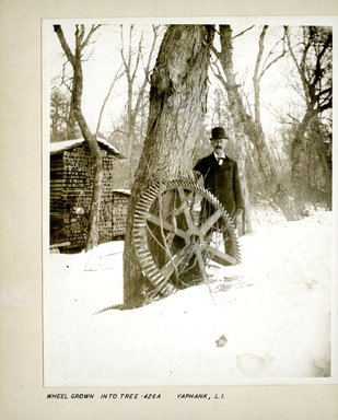 George Bradford Brainerd (American, 1845-1887). <em>Wheel Grown into Tree, Yaphank, Long Island</em>, ca. 1872-1887. Collodion silver glass wet plate negative