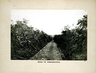 George Bradford Brainerd (American, 1845-1887). <em>Road to Ronkonkoma</em>, ca. 1872-1887. Collodion silver glass wet plate negative Brooklyn Museum, Brooklyn Museum/Brooklyn Public Library, Brooklyn Collection, 1996.164.2-71 (Photo: Brooklyn Museum, 1996.164.2-71.jpg)