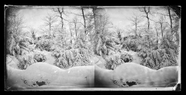 George Bradford Brainerd (American, 1845-1887). <em>Snow Scene, Prospect Park, Brooklyn</em>, ca. 1872-1887. Collodion silver glass wet plate negative Brooklyn Museum, Brooklyn Museum/Brooklyn Public Library, Brooklyn Collection, 1996.164.2-725 (Photo: Brooklyn Museum, 1996.164.2-725_glass_IMLS_SL2.jpg)