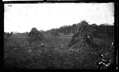 George Bradford Brainerd (American, 1845-1887). <em>Cornfield, Stony Brook, Long Island</em>, ca. 1872-1887. Collodion silver glass wet plate negative Brooklyn Museum, Brooklyn Museum/Brooklyn Public Library, Brooklyn Collection, 1996.164.2-85 (Photo: Brooklyn Museum, 1996.164.2-85_glass_bw_SL4.jpg)