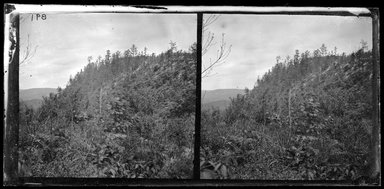 George Bradford Brainerd (American, 1845-1887). <em>Just Beyond, Otisville, New York</em>, 1876. Collodion silver glass wet plate negative Brooklyn Museum, Brooklyn Museum/Brooklyn Public Library, Brooklyn Collection, 1996.164.2-891 (Photo: Brooklyn Museum, 1996.164.2-891_glass_bw_SL1.jpg)