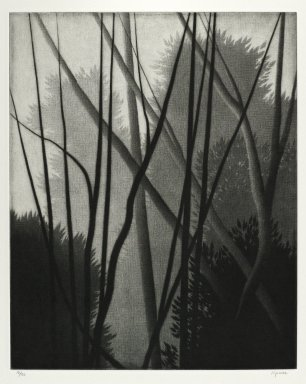 Robert Kipniss (American, born 1931). <em>Trees and Trees</em>, 1996. Mezzotint on heavy laid Arches white paper, Sheet: 11 3/4 x 9 3/8 in. (29.8 x 23.8 cm). Brooklyn Museum, Gift of the artist, 1997.82. © artist or artist's estate (Photo: Brooklyn Museum, 1997.82_PS4.jpg)
