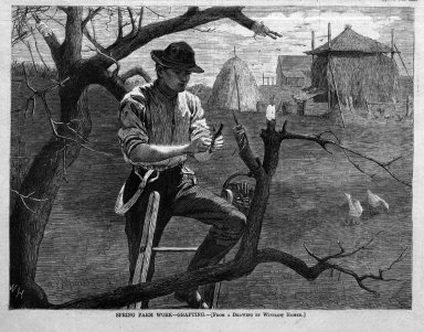 Winslow Homer (American, 1836-1910). <em>Spring Farm Work--Grafting</em>, 1870. Wood engraving, Image: 7 x 9 1/8 in. (17.8 x 23.2 cm). Brooklyn Museum, Gift of Harvey Isbitts, 1998.105.148 (Photo: Brooklyn Museum, 1998.105.148_bw.jpg)