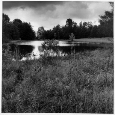 Sally Gall (American, born 1956). <em>Pond</em>, 1990. Toned gelatin silver photograph, image: 20 x 16 in. (50.8 x 40.6 cm). Brooklyn Museum, Gift of Gerald Lotenberg, 1999.150.3. © artist or artist's estate (Photo: Brooklyn Museum, 1999.150.3_bw.jpg)
