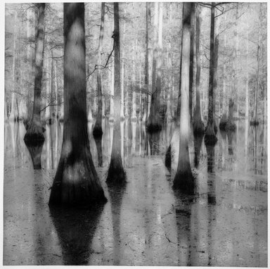 Sally Gall (American, born 1956). <em>Bayou</em>, 1992. Toned gelatin silver photograph, image: 15 x 15 in. (38.1 x 38.1 cm). Brooklyn Museum, Gift of Gerald Lotenberg, 1999.150.4. © artist or artist's estate (Photo: Brooklyn Museum, 1999.150.4_bw.jpg)