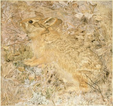 Gerald H. Thayer (American, 1883-1935). <em>The Cotton-Tail Rabbit among Dry Grasses and Leaves</em>, 1904. Opaque watercolor with touches of translucent watercolor and graphite on smooth-textured paper-surfaced pulpboard, 18 3/4 x 19 1/2 in. (47.6 x 49.5 cm). Brooklyn Museum, Gift of Mrs. Harry Payne Whitney, 20.645 (Photo: Brooklyn Museum, 20.645_SL3.jpg)