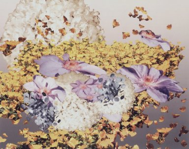 Alyson Shotz (American, born 1964). <em>Natural Selection #3</em>, 1999. Inkjet print, 28 1/2 x 33 in.  (72.4 x 83.8 cm). Brooklyn Museum, Alfred T. White Fund, 2001.60 (Photo: Brooklyn Museum, 2001.60_transp5859.jpg)