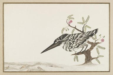 <em>A Kingfisher Watching Fish</em>, 18th century. Ink and color on paper, mat opening: 9 5/8 x 17 7/8 in. (24.4 x 45.4 cm). Brooklyn Museum, Gift of Dr. Alvin E. Friedman-Kien, 2002.119.18 (Photo: Brooklyn Museum, 2002.119.18_IMLS_PS4.jpg)
