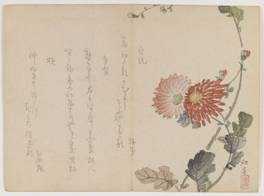 Shûtei Tanaka (Japanese, 1810-1858). <em>Chrysanthemums</em>, ca. 1855. Woodblock print; horizontal Chûban yoko-e format, 7 1/8 x 9 7/8 in. (18.1 x 25.1 cm). Brooklyn Museum, Gift of Dr. Eleanor Z. Wallace in memory of her husband, Dr. Stanley L. Wallace, 2002.121.32 (Photo: Brooklyn Museum, 2002.121.32_IMLS_PS3.jpg)