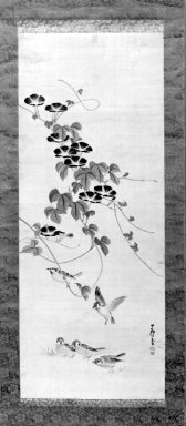 Nagasawa Rosetsu (Japanese, 1754-1799). <em>Morning Glories and Sparrows</em>, 1754-1799. Hanging scroll, ink and color on silk, image: 41 1/2 x 16 1/2 in.  (105.4 x 41.9 cm). Brooklyn Museum, Bequest of Christiana C. Burnett, 2002.4.6 (Photo: Brooklyn Museum, 2002.4.6_bw.jpg)