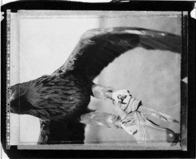 Alice Garik (American, born 1945). <em>[Untitled] (Eagle)</em>, 2001. Palladium print, 7 5/16 x 6 in.  (18.6 x 15.2 cm). Brooklyn Museum, Gift of the artist, 2002.79.2. © artist or artist's estate (Photo: Brooklyn Museum, 2002.79.2_bw.jpg)