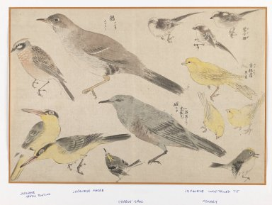 Unknown (Shinjo School). <em>Birds in Okyo Style</em>. Woodblock color print, 10 3/16 x 15 in. (25.9 x 38.1 cm). Brooklyn Museum, Gift of the Estate of Dr. Eleanor Z. Wallace, 2007.32.118 (Photo: Brooklyn Museum, 2007.32.118_IMLS_PS3.jpg)