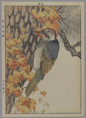 Unknown. <em>[Untitled] (Woodpecker)</em>, 1892. Print, Other (Sight): 12 3/16 x 8 7/16 in. (31 x 21.4 cm). Brooklyn Museum, Gift of the Estate of Dr. Eleanor Z. Wallace, 2007.32.130 (Photo: Brooklyn Museum, 2007.32.130_PS4.jpg)