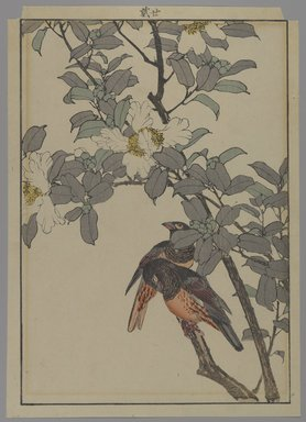 Unknown. <em>[Untitled] (Two Birds with White Flowers)</em>, 1892. Print, Other (Sight): 12 3/16 x 8 7/16 in. (31 x 21.4 cm). Brooklyn Museum, Gift of the Estate of Dr. Eleanor Z. Wallace, 2007.32.131 (Photo: Brooklyn Museum, 2007.32.131_PS4.jpg)