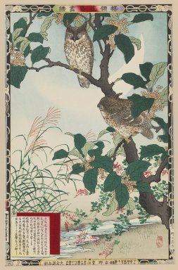 Kono Bairei (Japanese, 1844-1895). <em>Fragrant Olive Blossoms (Osmanthus fragrans) and Horned Owl, from the series Bairei's Picture Album of Birds and Flowers</em>, 1883. Color woodblock print on paper, 14 1/2 x 9 1/2 in. (36.8 x 24.1 cm). Brooklyn Museum, Gift of the Estate of Dr. Eleanor Z. Wallace, 2007.32.27 (Photo: Brooklyn Museum, 2007.32.27_IMLS_PS3.jpg)